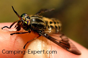 Insect Bites and Stings : Identify biting insects and bug