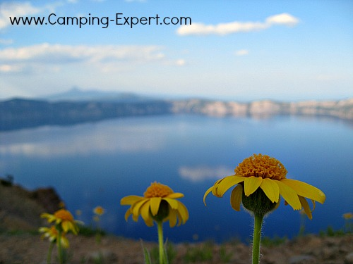 flower at crater lake